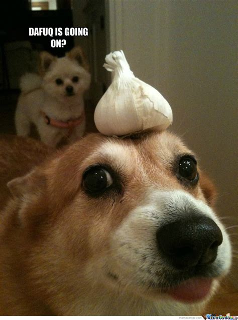 garlic and dogs surprised pictures with quotes quotesgram