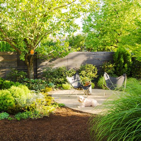 backyard ideas for dogs sunset