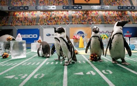 puppy bowl locker room competing networks get on sunday ny daily news