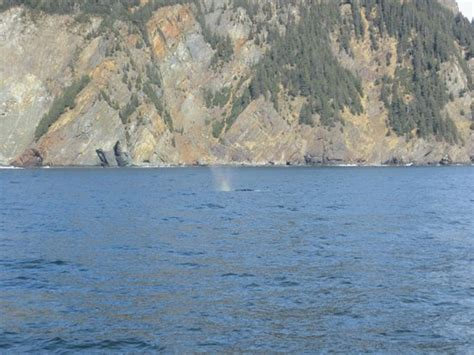 boat cruise jeffreys bay whale picture of kenai fjords tours seward tripadvisor