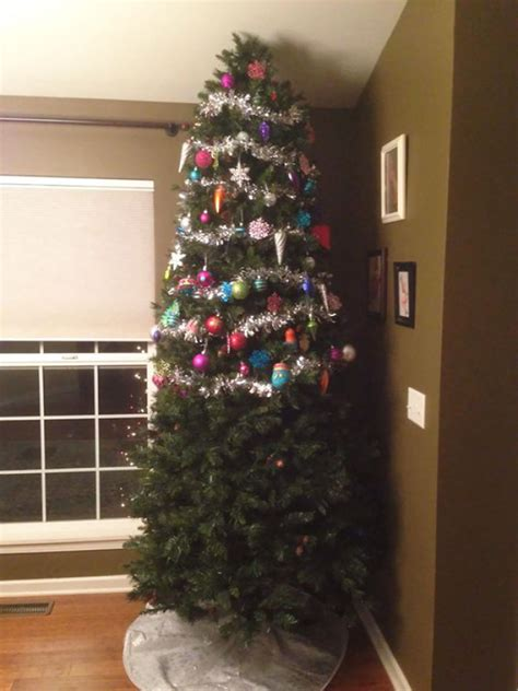 cat proof tree 10 who found a brilliant way to save their