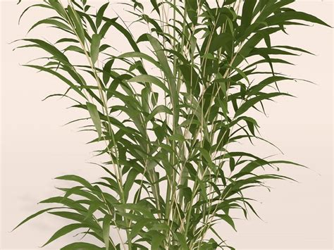 Bamboo Plants 3d Model Free bamboo plant free 3d model 3ds c4d cgtrader