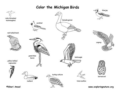 michigan wildlife a coloring field guide books michigan