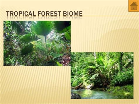 Missouri Botanical Garden Biomes Missouri Botanical Garden Biomes Biomes And Ecozones A