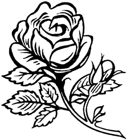 large rose coloring page beautiful big rose coloring page supercoloring com