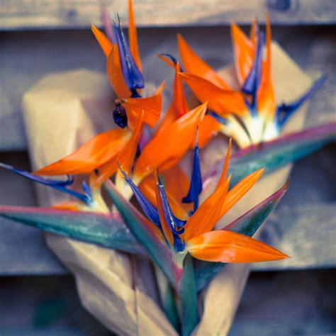 sterlizie fiori 28 images fiore tropicale strelitzia