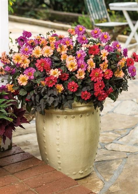 103 best images about container garden recipes on