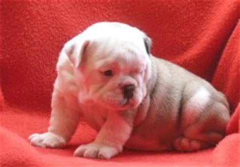 free puppies huntsville al free puppies for adoption in huntsville al breeds picture