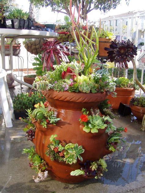 strawberry succulent pot  garden pots diy flower