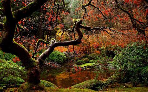 autumn garden japanese garden in the autumn hd desktop wallpaper