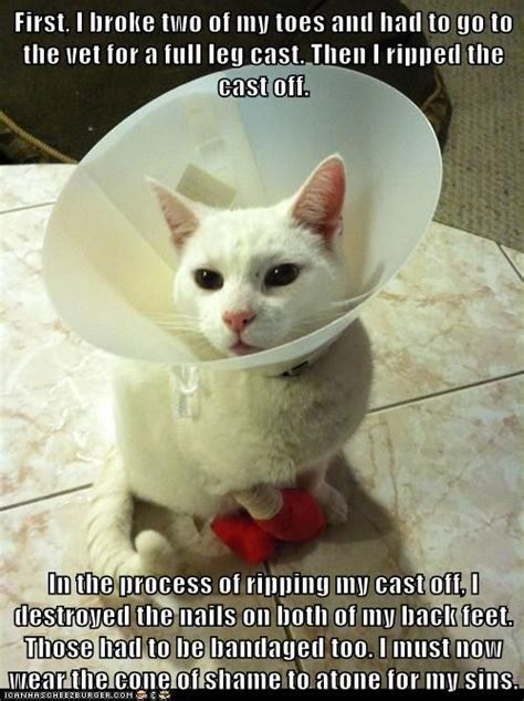 Cone Of Shame Meme - 77 best the cone of shame pet shaming images on pinterest