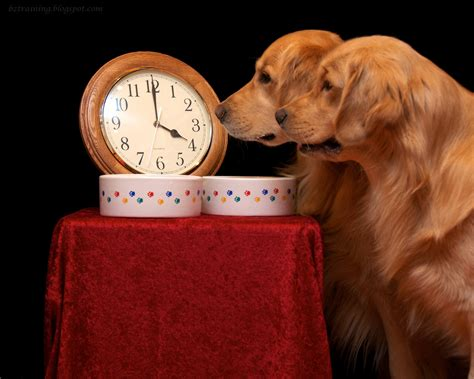 do dogs a concept of time how do dogs perceive time animalblog