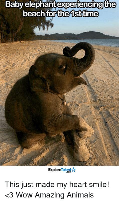 Baby Elephant Meme - 25 best memes about baby elephants baby elephants memes