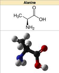 Glycine Detox Nonpolar by Biochemistry Amino Acids Flashcards Quizlet