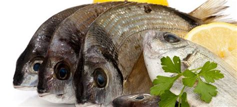 come cucinare il sarago sarago cucinarepesce