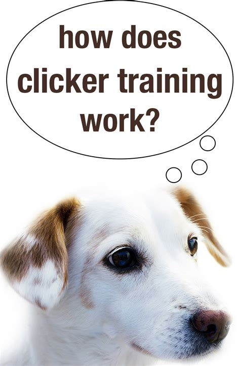 how dogs how does clicker work the happy puppy site