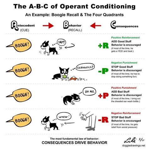 operant conditioning dog training theory tips articles
