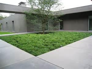 Paving Backyard Pers Buxus En Taxus Kwekerij Herplant Bvba