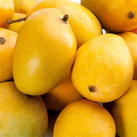 Js Manggo photo gallery kokanwadi mango farm plots