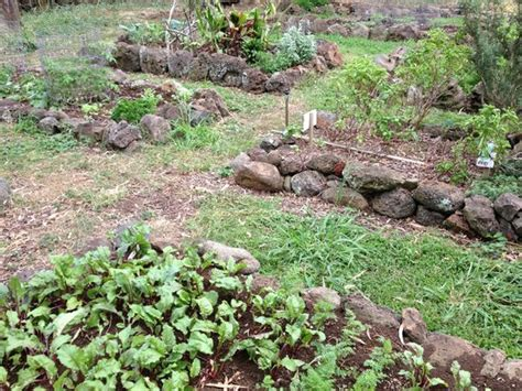 Perfect Sunset Picture Of Puakea Ranch Hawi Tripadvisor Vegetable Gardening In Hawaii