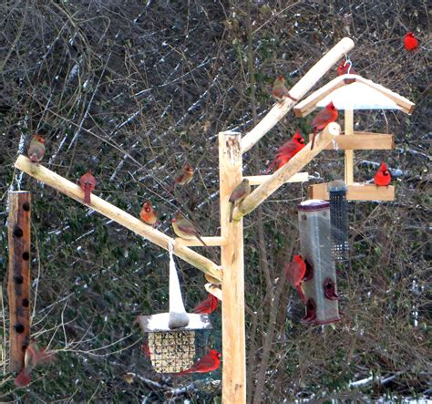 tall bird feeder pole squirrel proof over 8 feet long