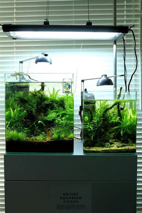 aquascape plants list eheim aquastyle low tech link includes plant list aquascaping aquarium pinterest