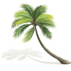 le palmier pour un jardin magazine avantages