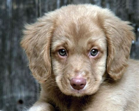 beautiful breeds most beautiful small dogs breeds
