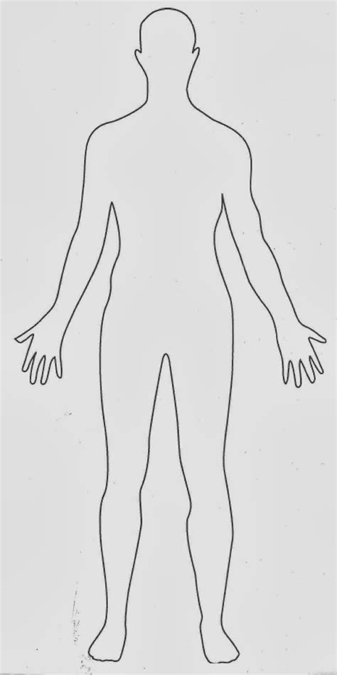 human diagram human outline front and back
