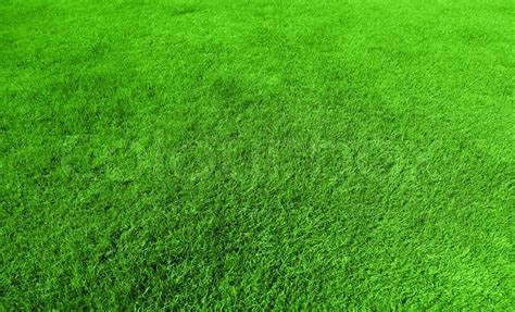 pattern nature grass abstract green grass background fresh healthy flora with