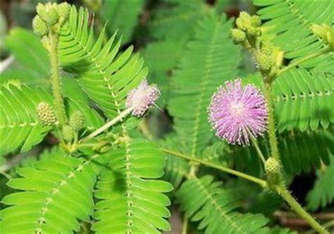 jenis jenis tanaman obat herbal kandungan manfaat