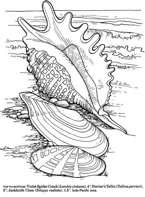 coloring pages for adults beach dover shells to coloring pesquisa google adult