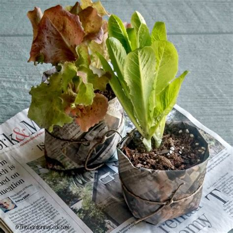 Cooks Garden Seeds by Frugal Seed Starting Pots And Containers 10 Creative Ideas