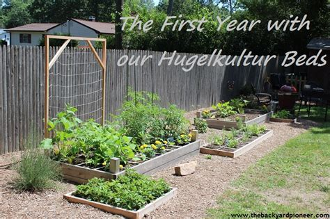 hugelkultur raised beds the first year with our hugelkultur beds
