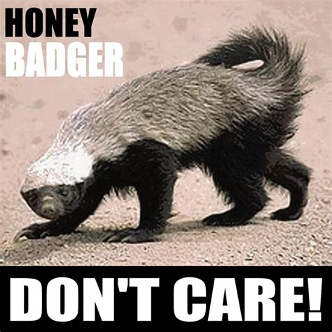 honey badger dont care quotes quotesgram