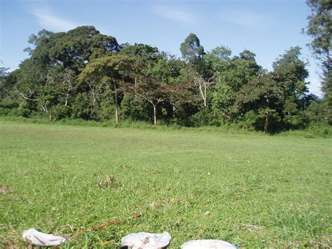 Type Of Trees by File Forest Edge Habitat Kibale National Park Jpg Wikipedia