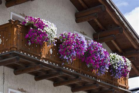 winterharte pflanzen für balkon dekor pflanzen balkon
