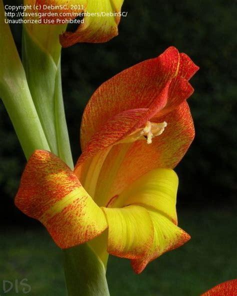 flores exoticas on pinterest 21 pins flores exoticas on pinterest 21 pins