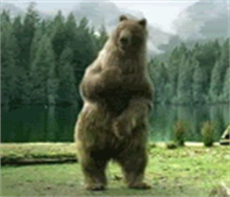 animated meme dancing bear