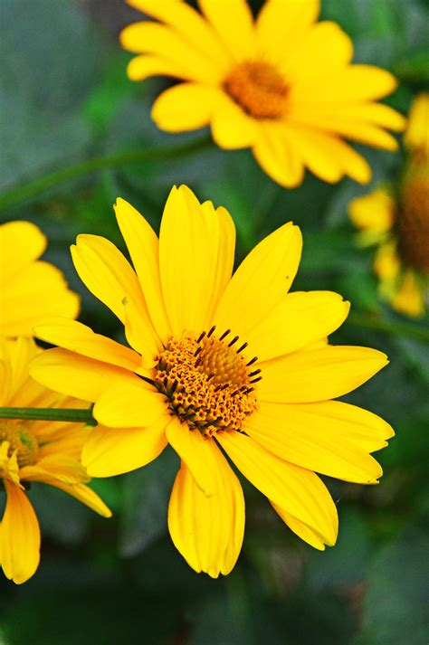 images summer yellow flowers flower white