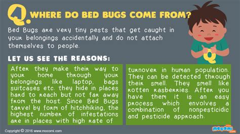why do bed bugs come where do bed bugs come from answer me for kids mocomi