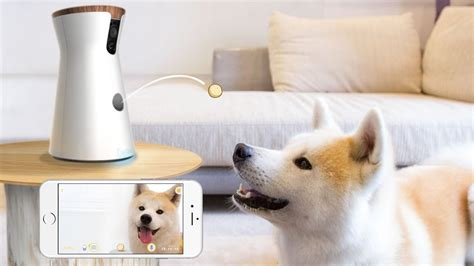 Furniture Trends 2017 by Furbo The Gadget That Accompanies Your Dog When You Re