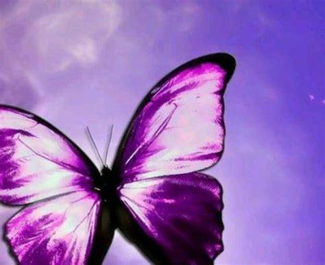 Lavender 3 Tone Violet purple things the color purple purple
