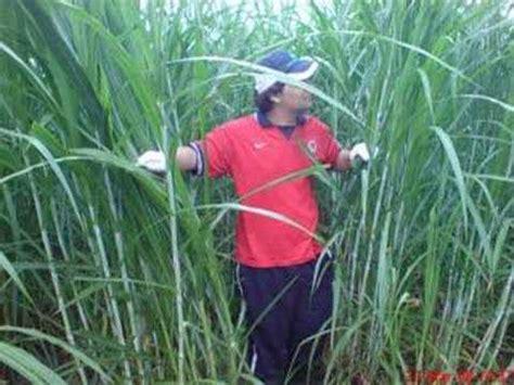 Mesin Pencacah Rumput Termurah mesin rumput semak samun doovi
