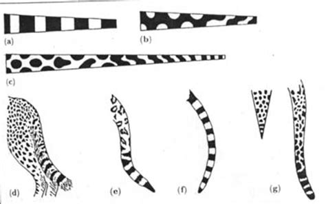 printable animal tails animal print trace patterns 171 free knitting patterns