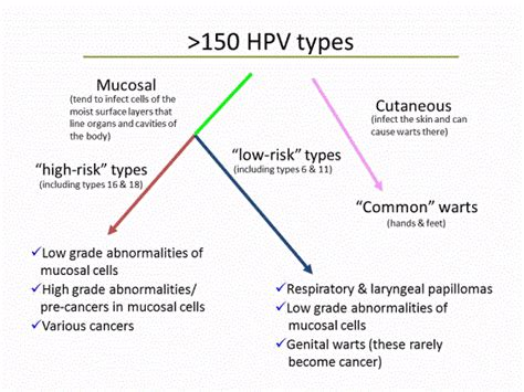 papilloma virus pap test the hpv test versus the pap smear what need to