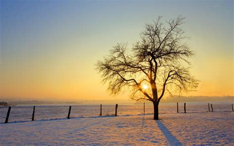 Landscape Photography With Sun Photography Landscape Nature Trees Sun