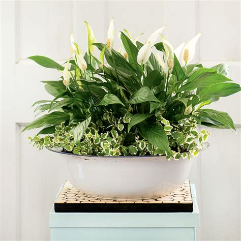 buy house plants online cheap buy house plants online canada 28 images artificial indoor plants for home in
