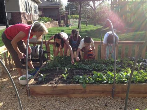 backyard urban farm company gardening for dummies with urban farm company mile high