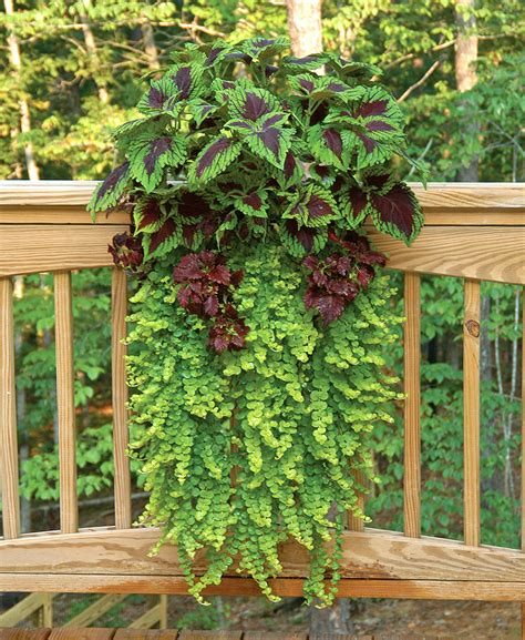 window box planters for railings window box and wall planter photo gallery